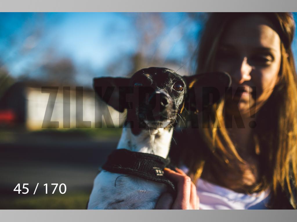 Feb Dogs-045.jpg