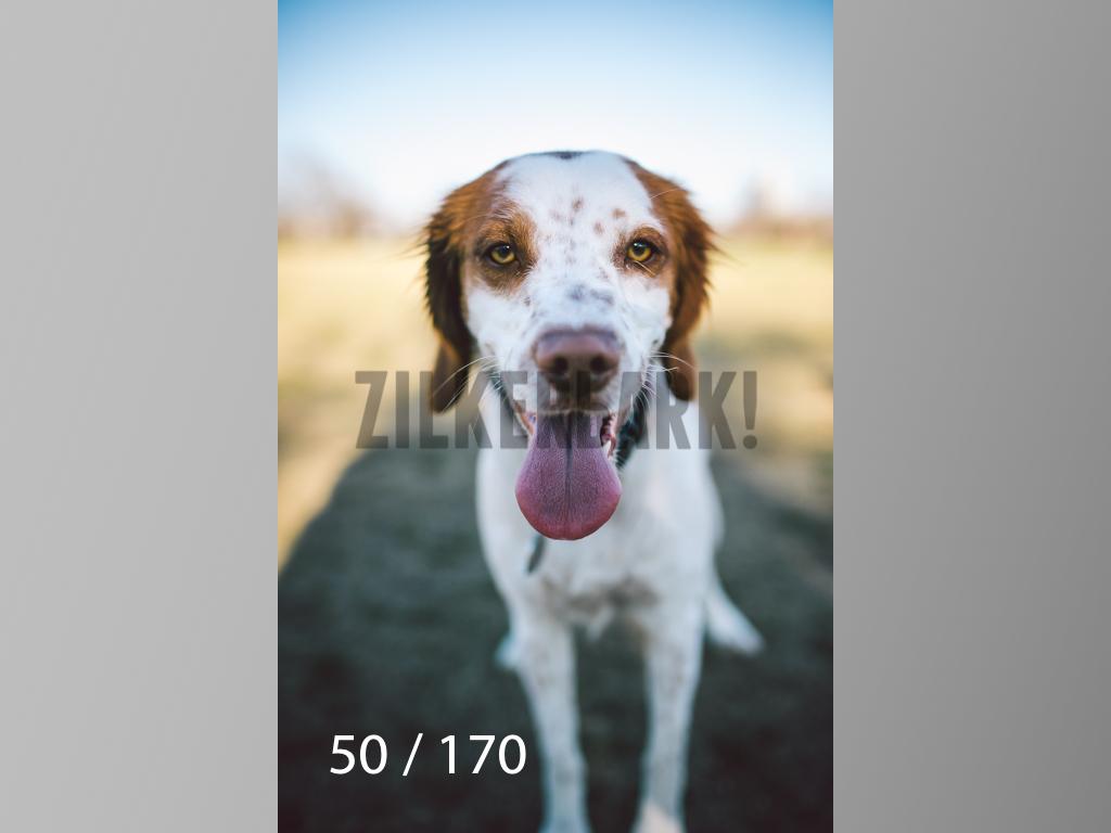 Feb Dogs-050.jpg