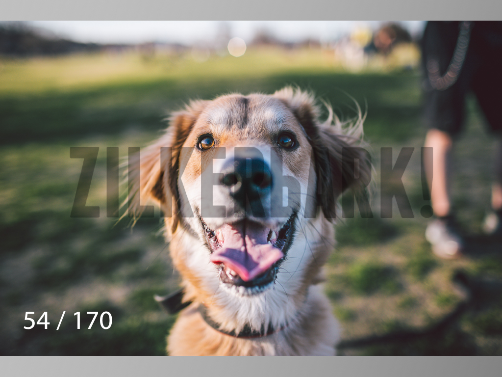 Feb Dogs-054.jpg