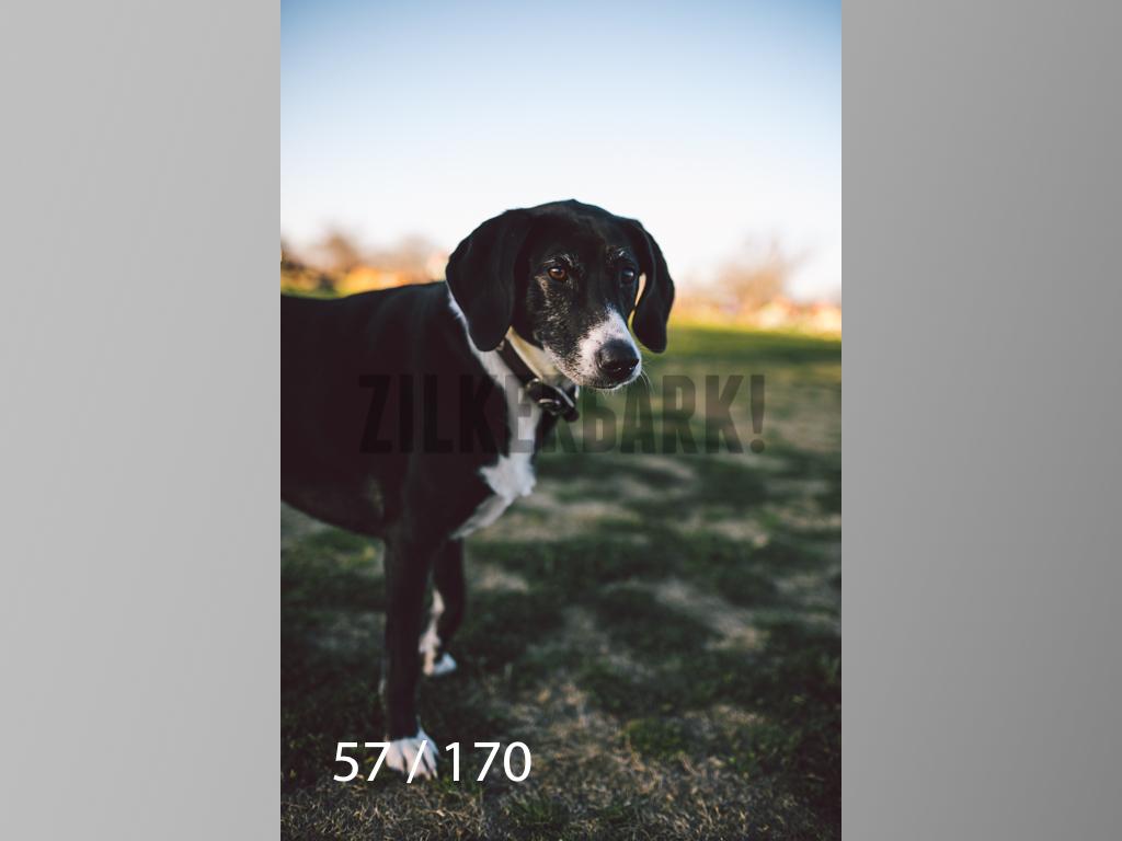 Feb Dogs-057.jpg