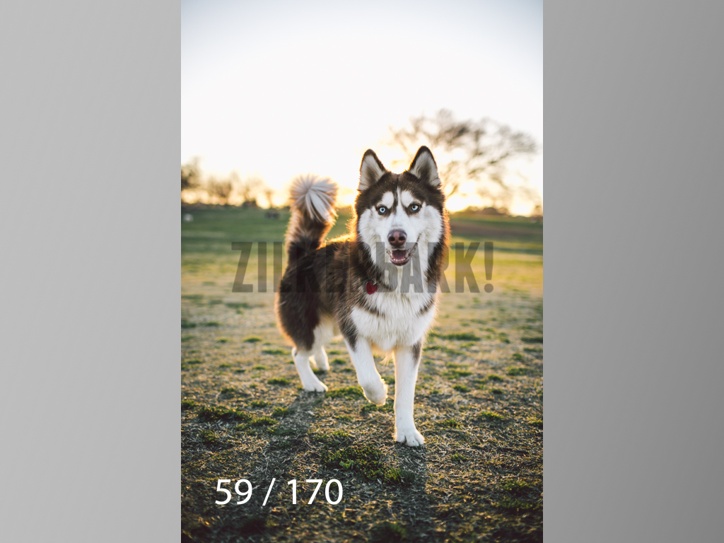 Feb Dogs-059.jpg