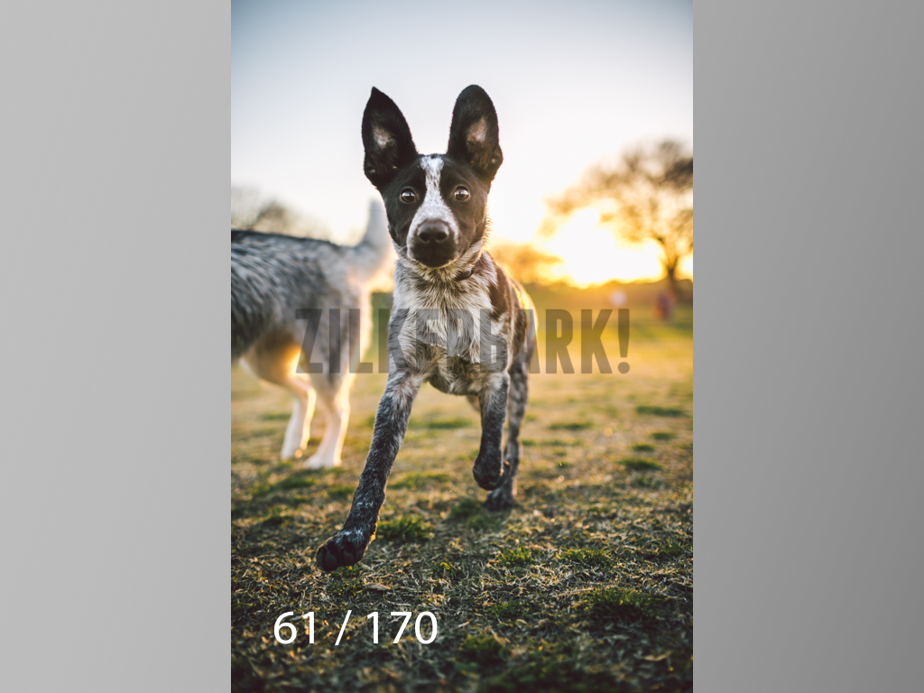 Feb Dogs-061.jpg