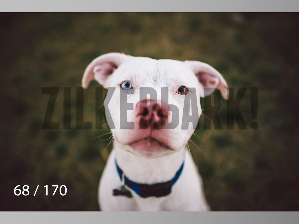 Feb Dogs-068.jpg
