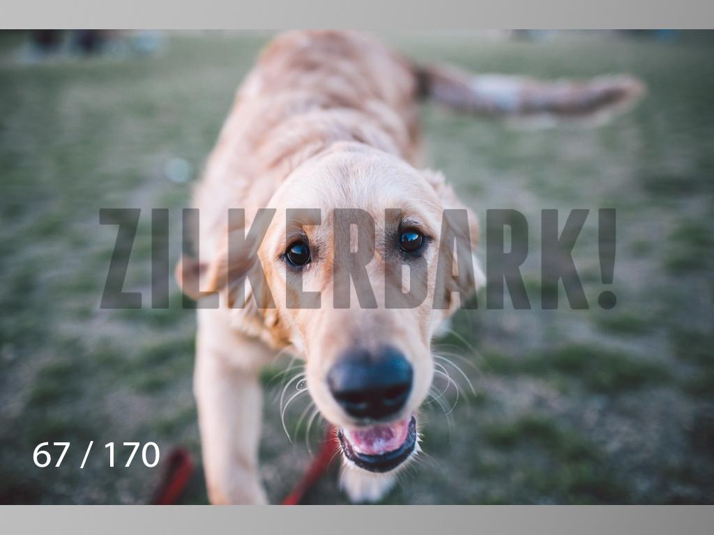 Feb Dogs-067.jpg