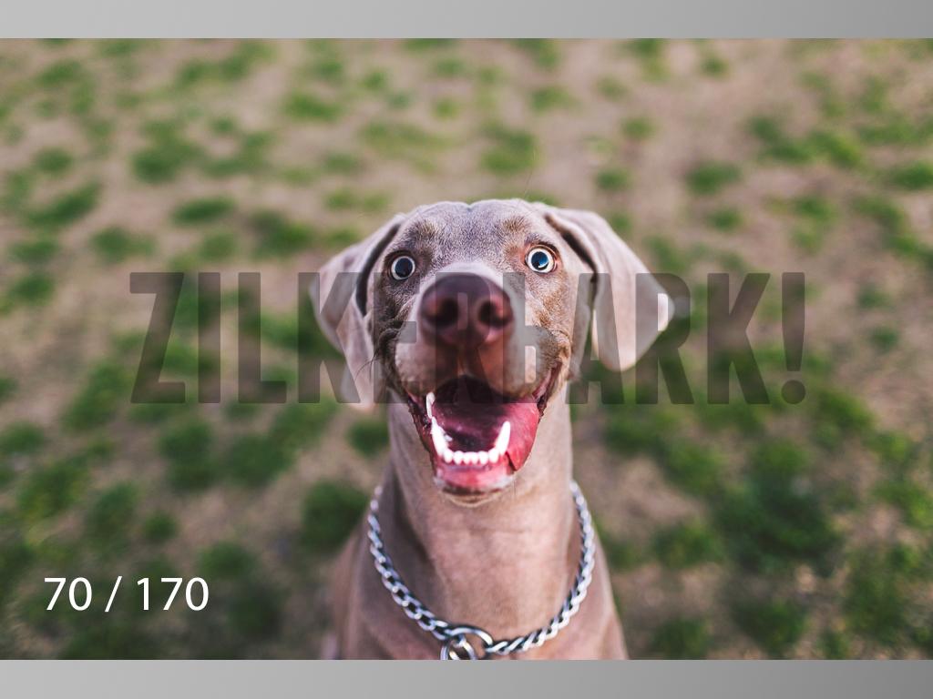 Feb Dogs-070.jpg