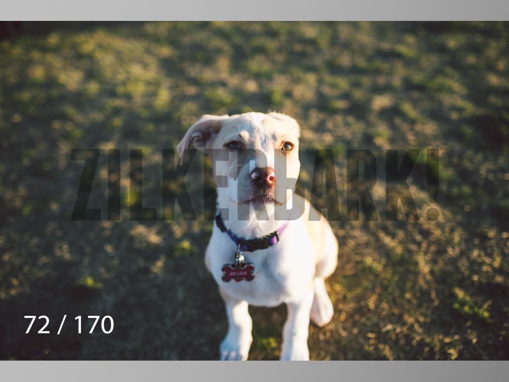 Feb Dogs-072.jpg