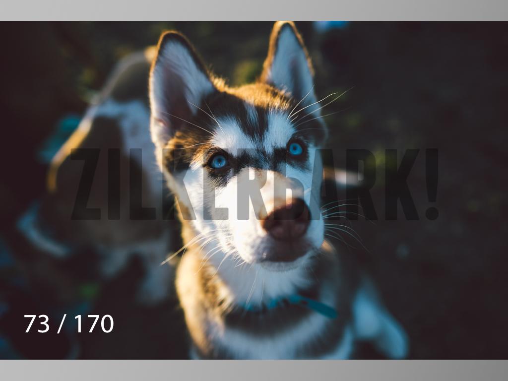 Feb Dogs-073.jpg
