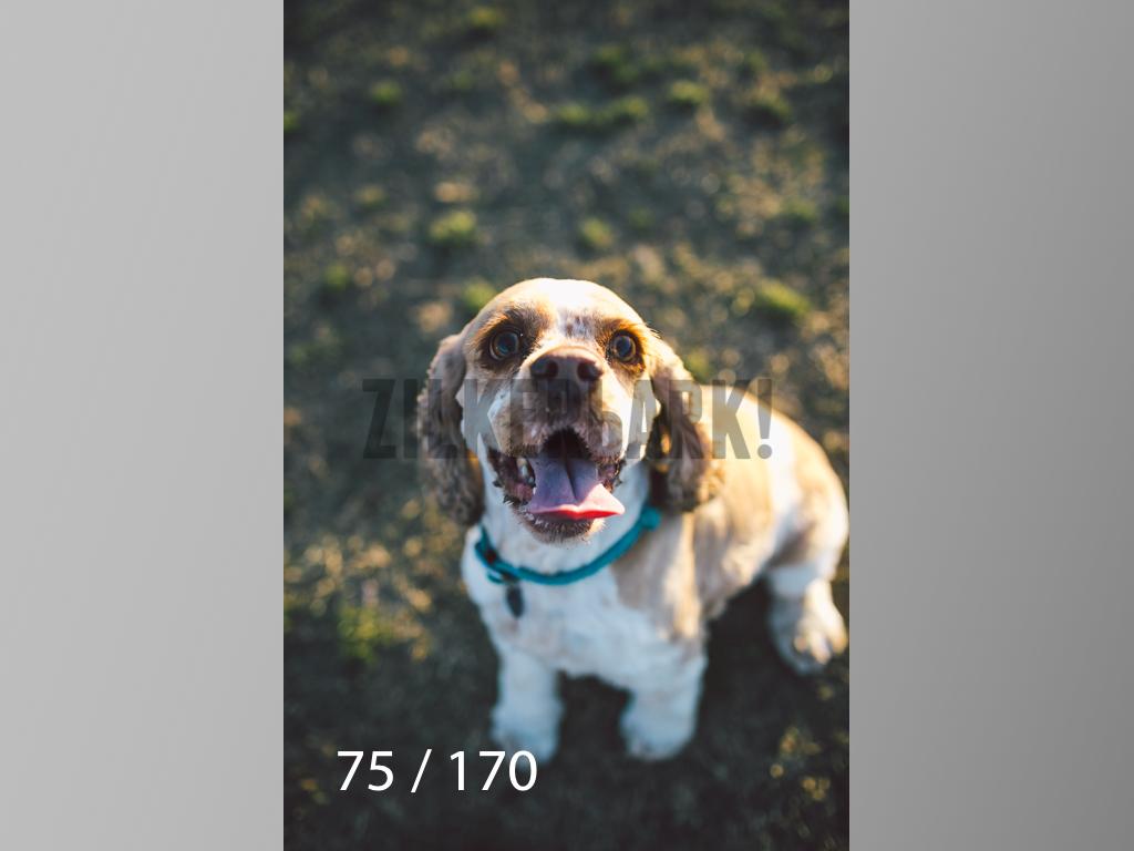 Feb Dogs-075.jpg