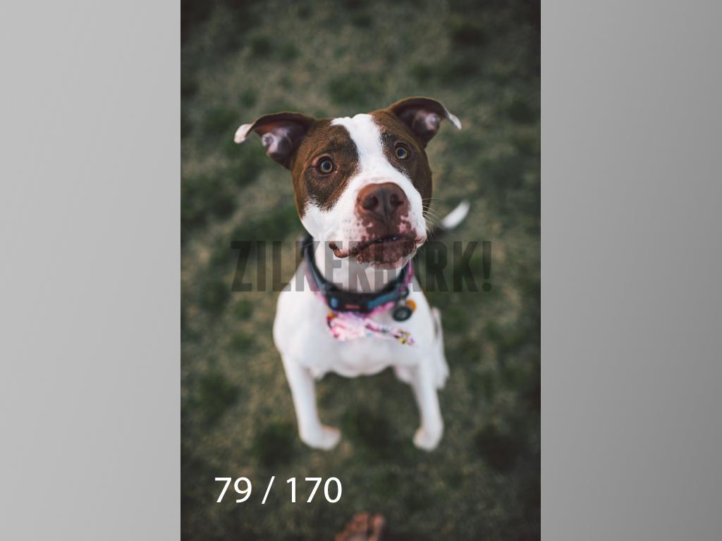 Feb Dogs-079.jpg