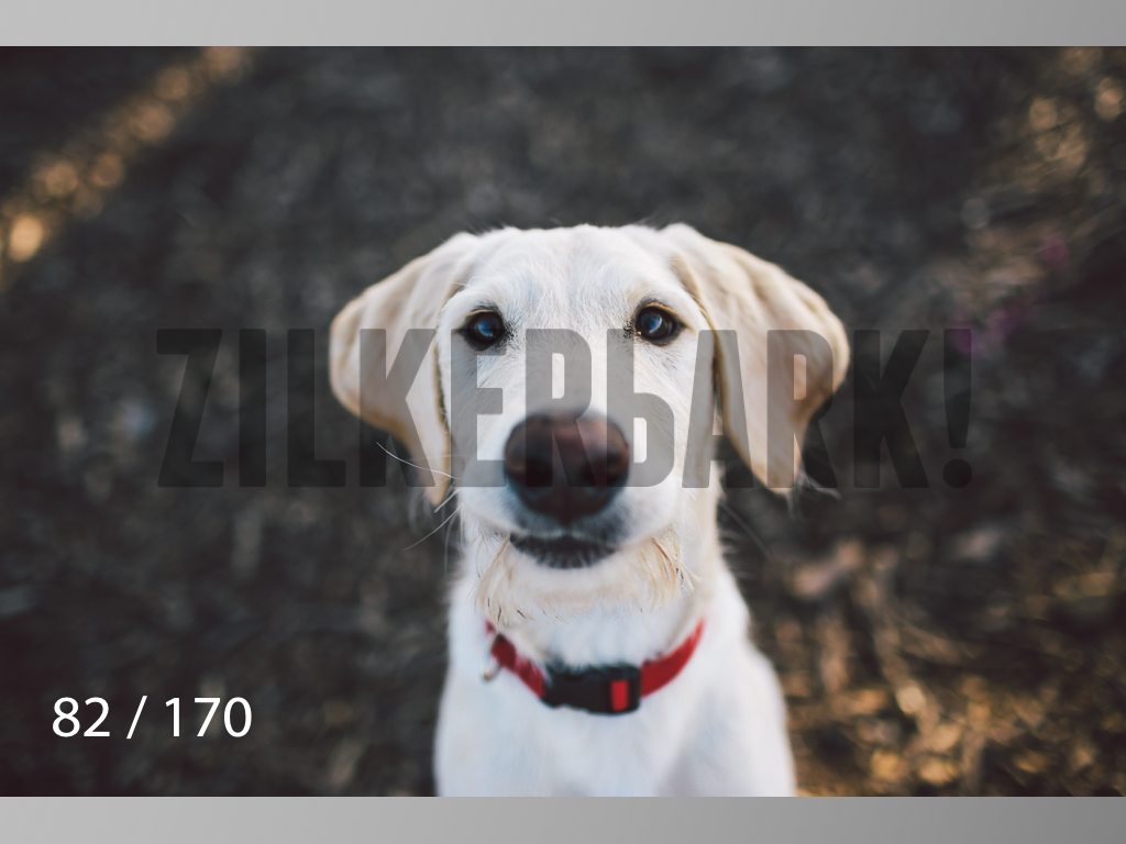 Feb Dogs-082.jpg