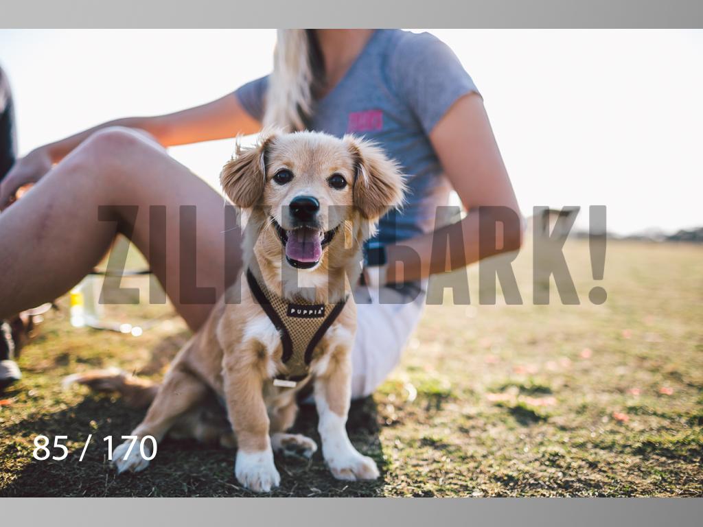 Feb Dogs-085.jpg