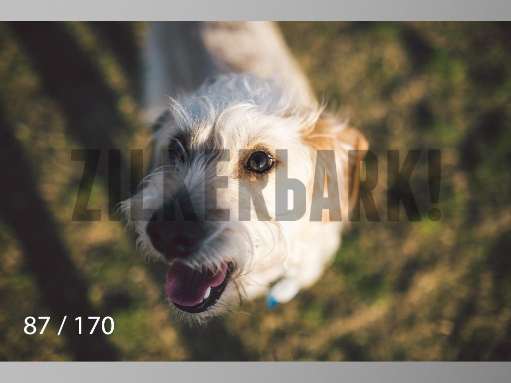 Feb Dogs-087.jpg