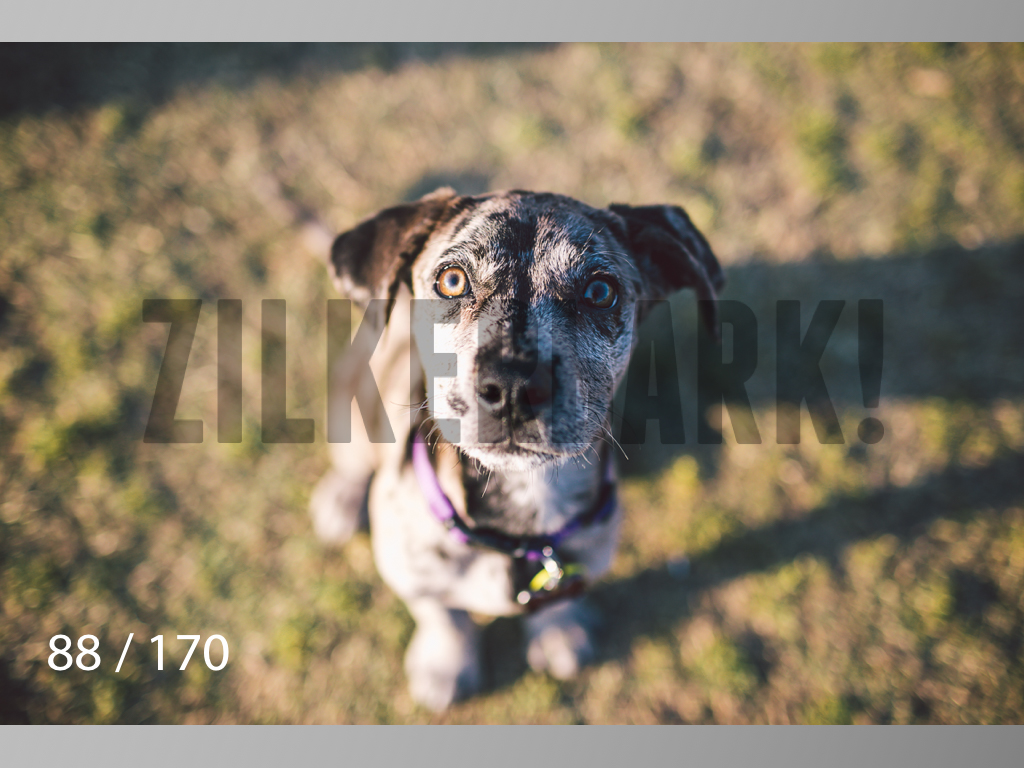 Feb Dogs-088.jpg