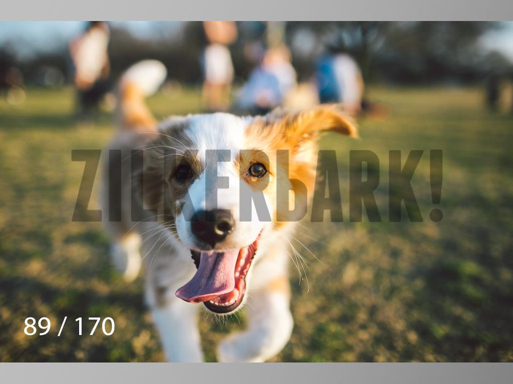 Feb Dogs-089.jpg