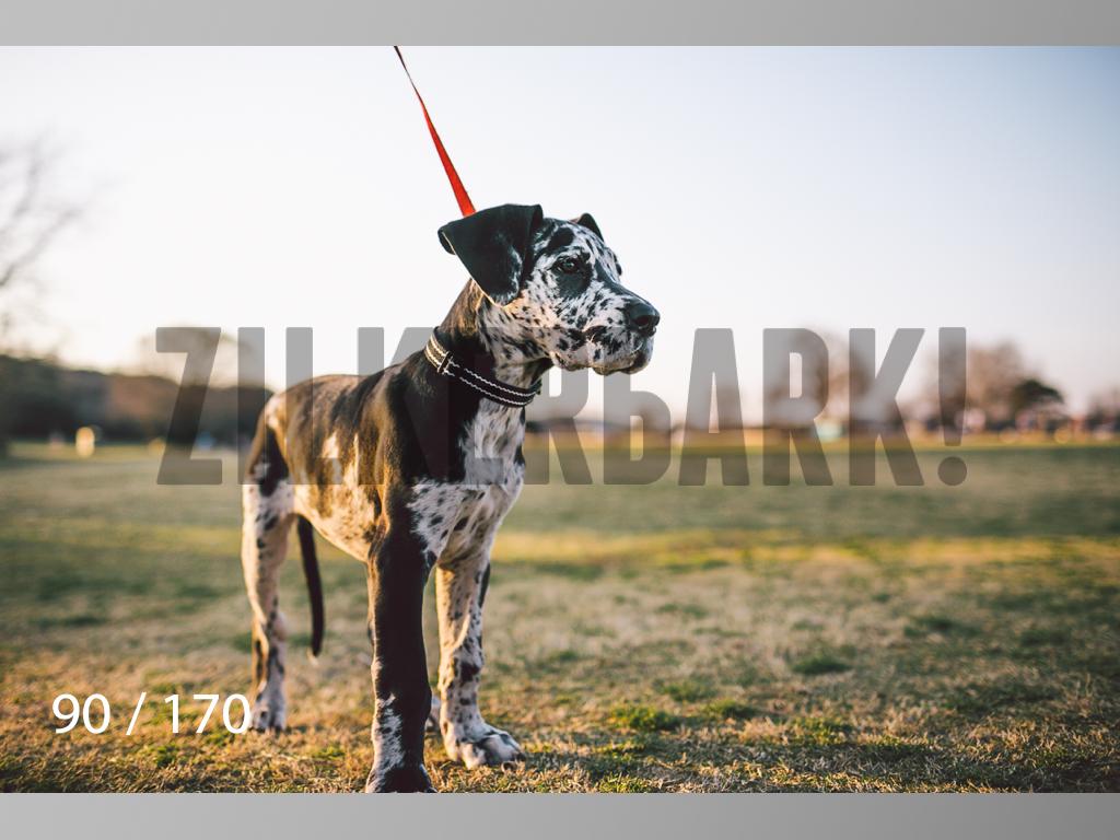 Feb Dogs-090.jpg
