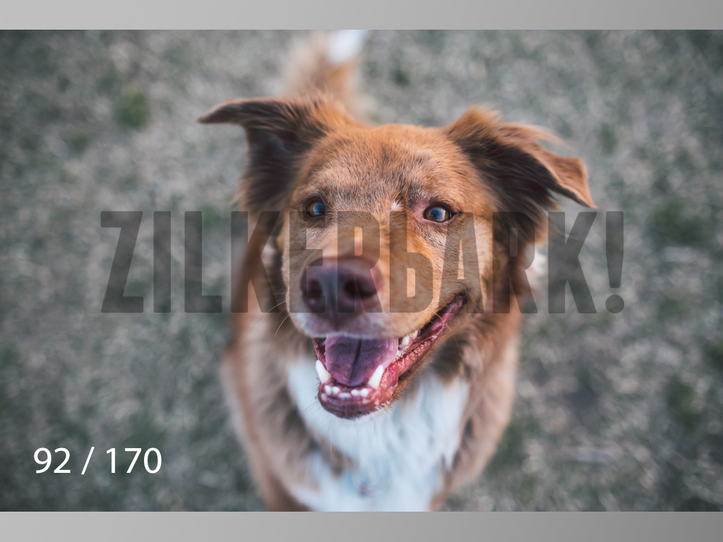 Feb Dogs-092.jpg
