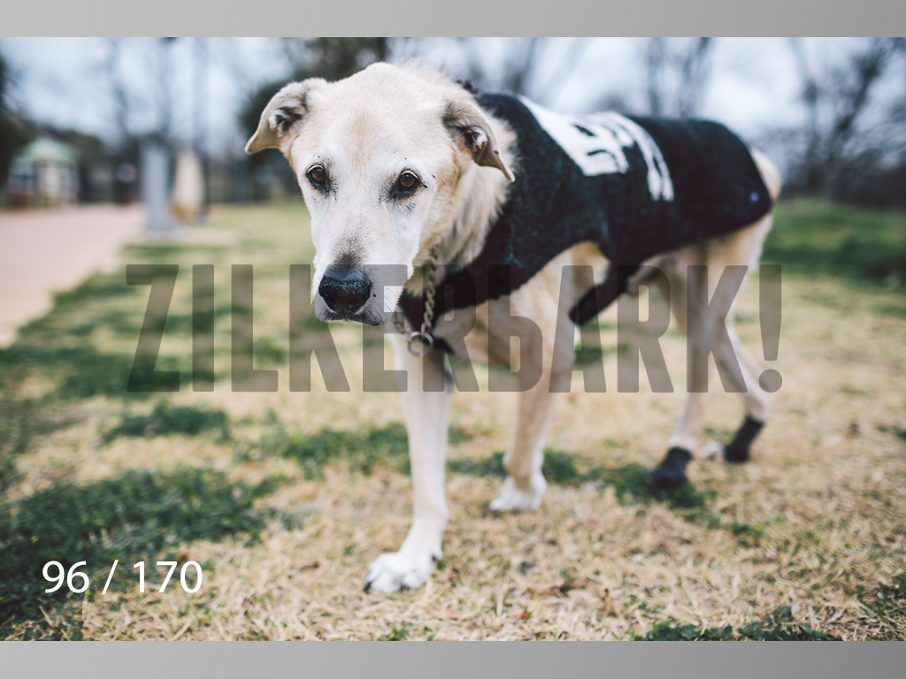 Feb Dogs-096.jpg