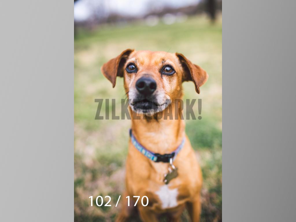 Feb Dogs-102.jpg