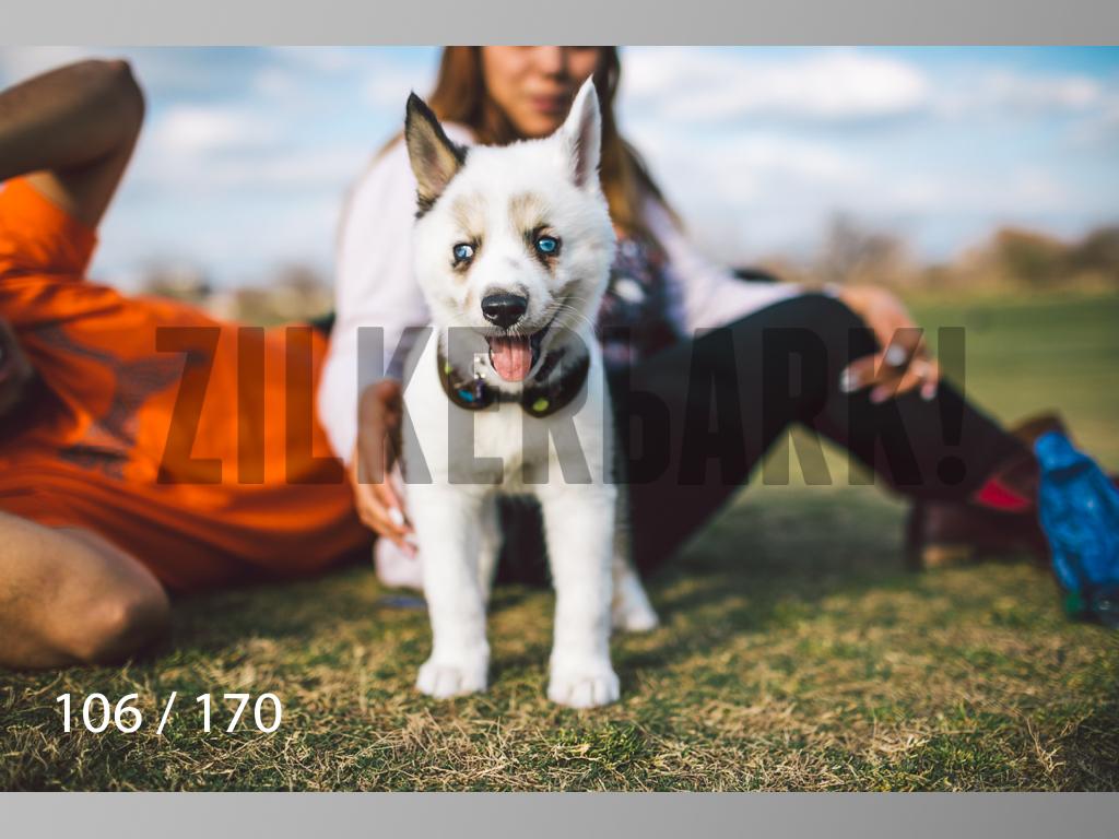 Feb Dogs-106.jpg