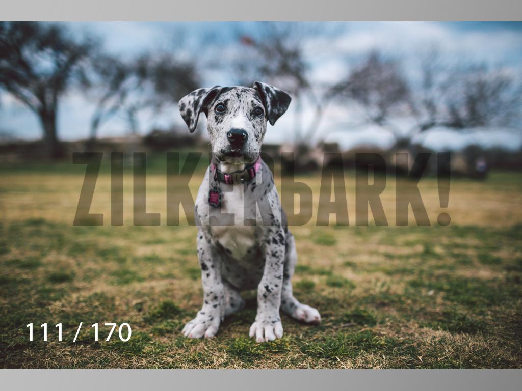Feb Dogs-111.jpg