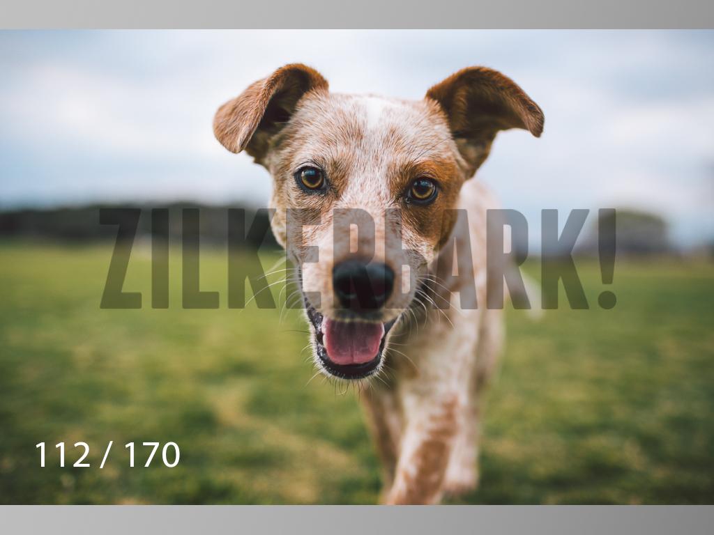 Feb Dogs-112.jpg