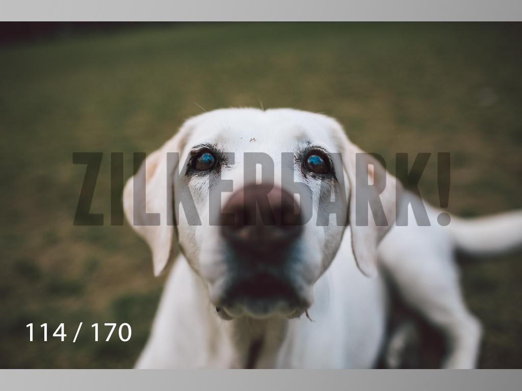 Feb Dogs-114.jpg
