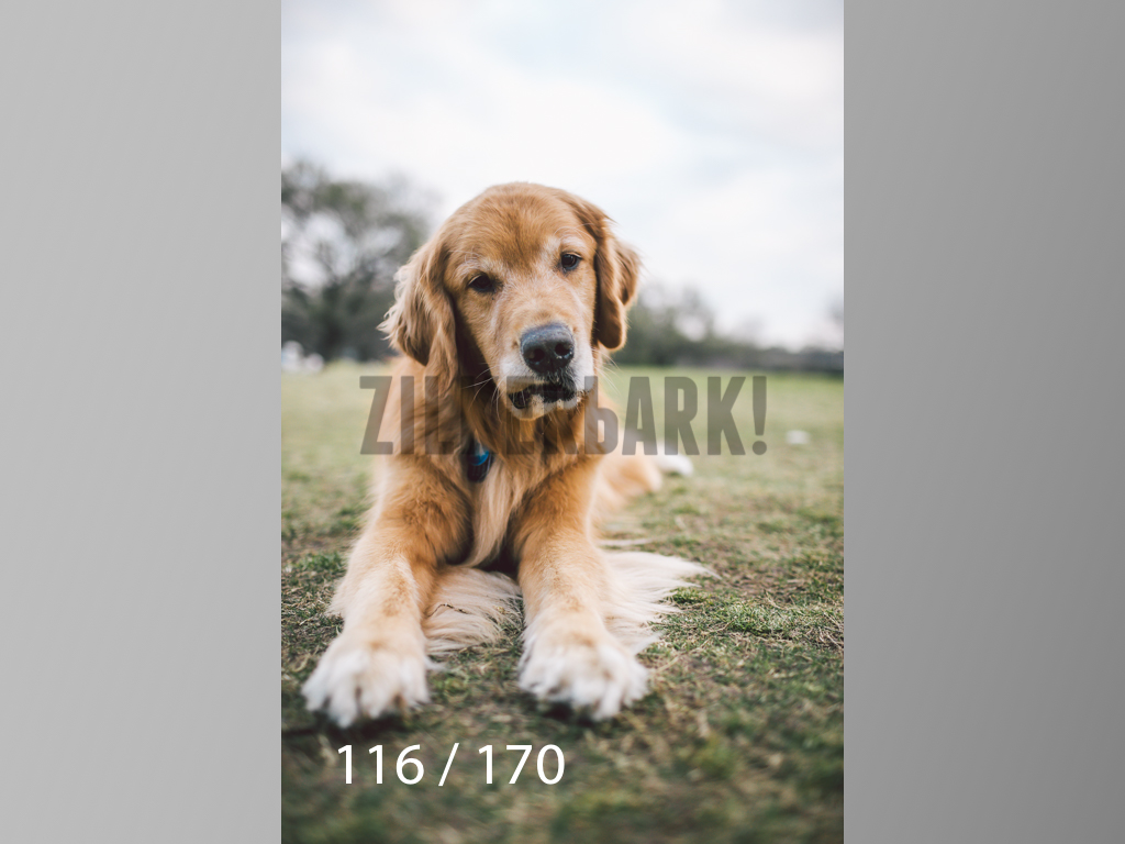 Feb Dogs-116.jpg