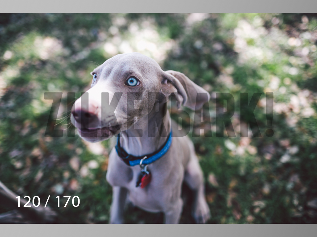 Feb Dogs-120.jpg