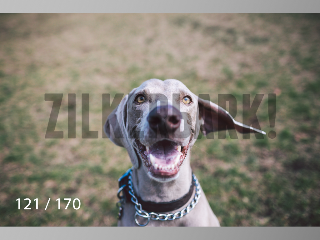 Feb Dogs-121.jpg