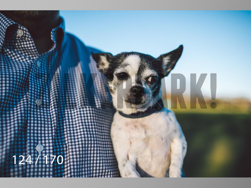 Feb Dogs-124.jpg