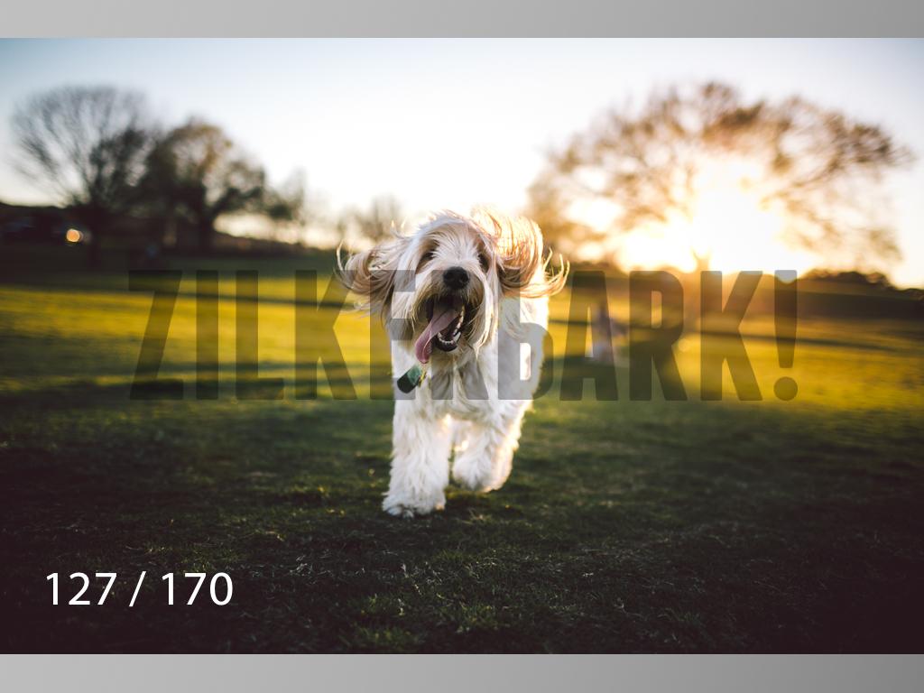 Feb Dogs-127.jpg