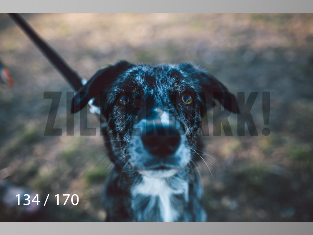 Feb Dogs-134.jpg