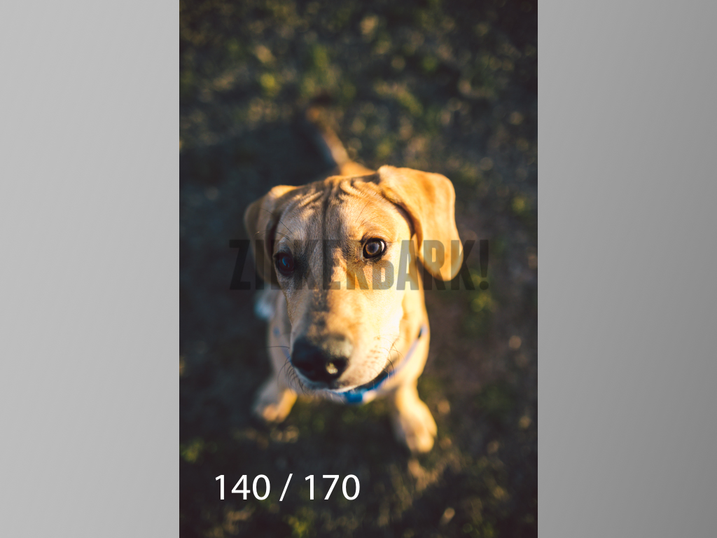 Feb Dogs-140.jpg