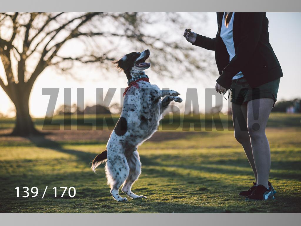 Feb Dogs-139.jpg