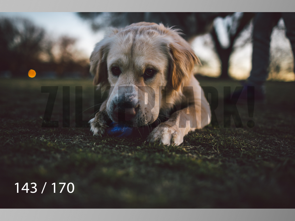 Feb Dogs-143.jpg