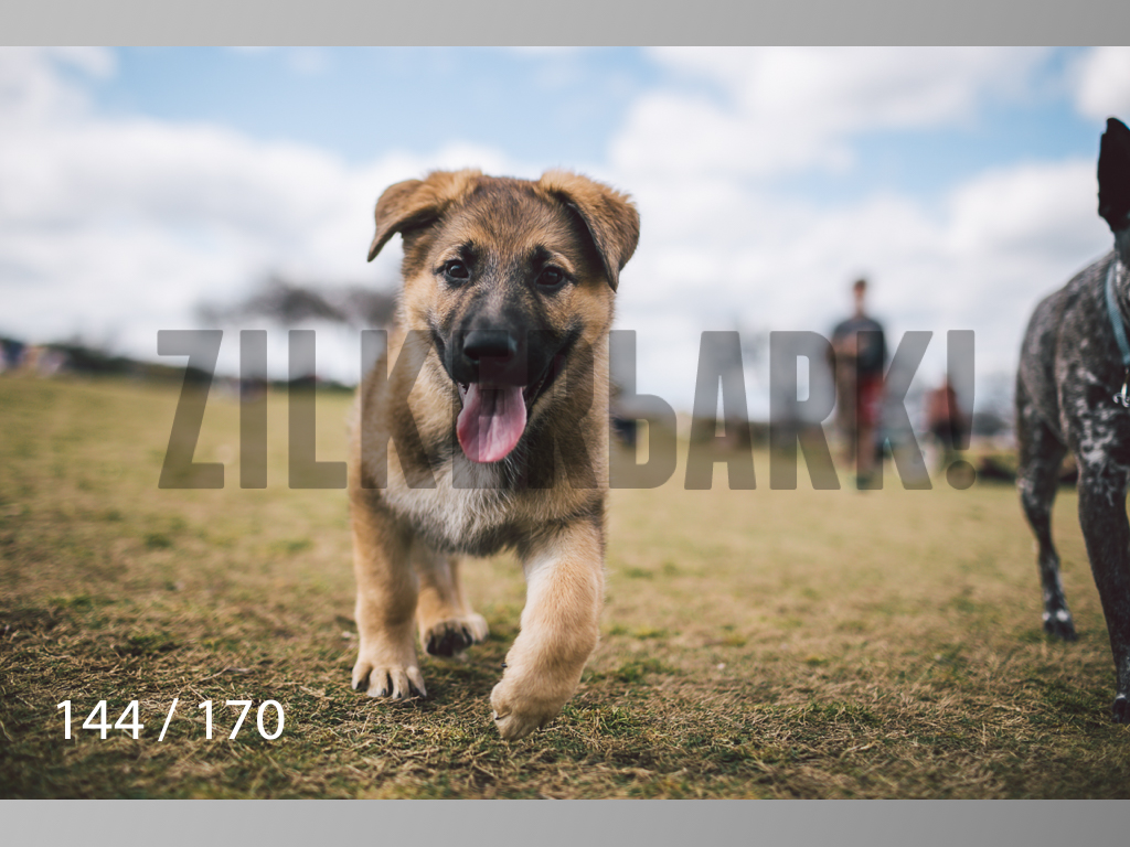 Feb Dogs-144.jpg