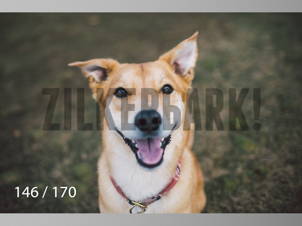 Feb Dogs-146.jpg