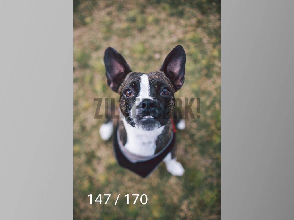 Feb Dogs-147.jpg