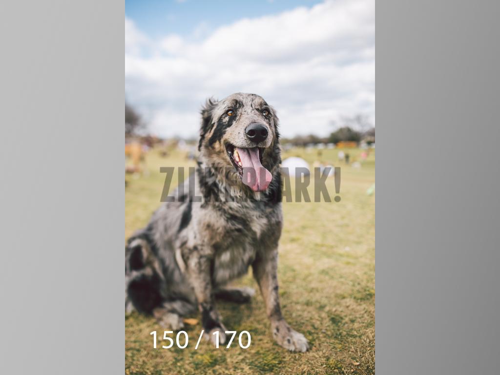 Feb Dogs-150.jpg