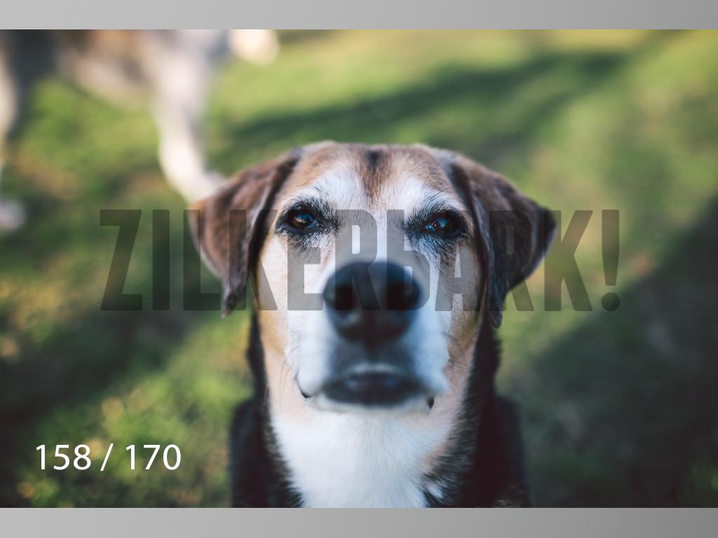 Feb Dogs-158.jpg