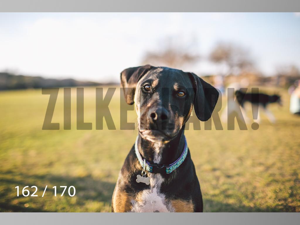 Feb Dogs-162.jpg