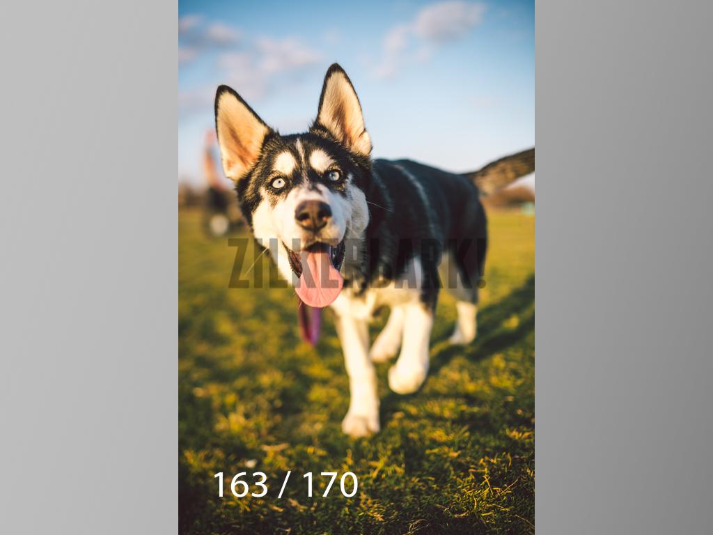 Feb Dogs-163.jpg