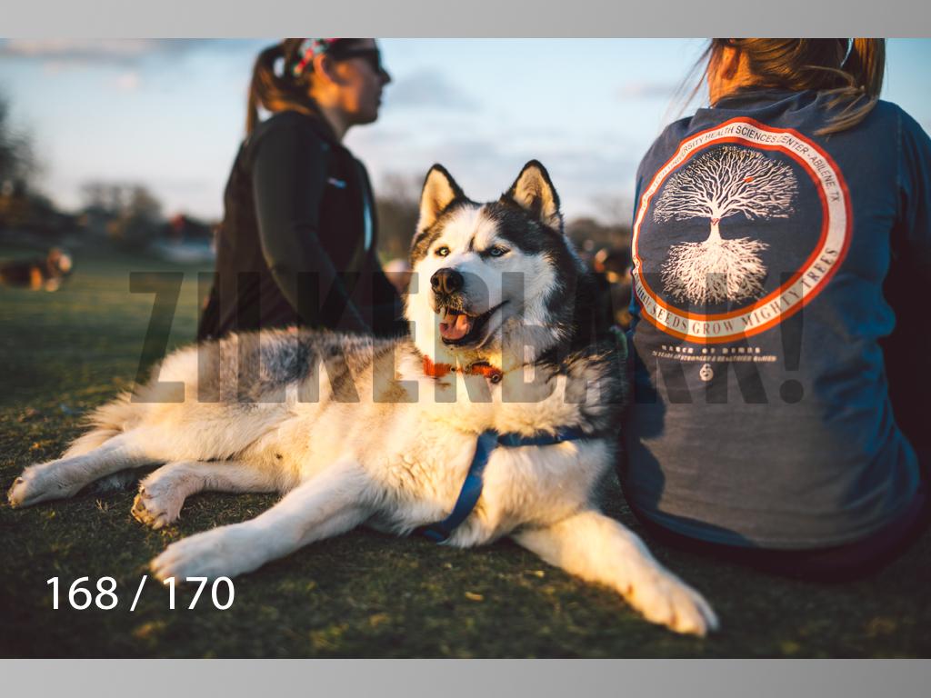 Feb Dogs-168.jpg