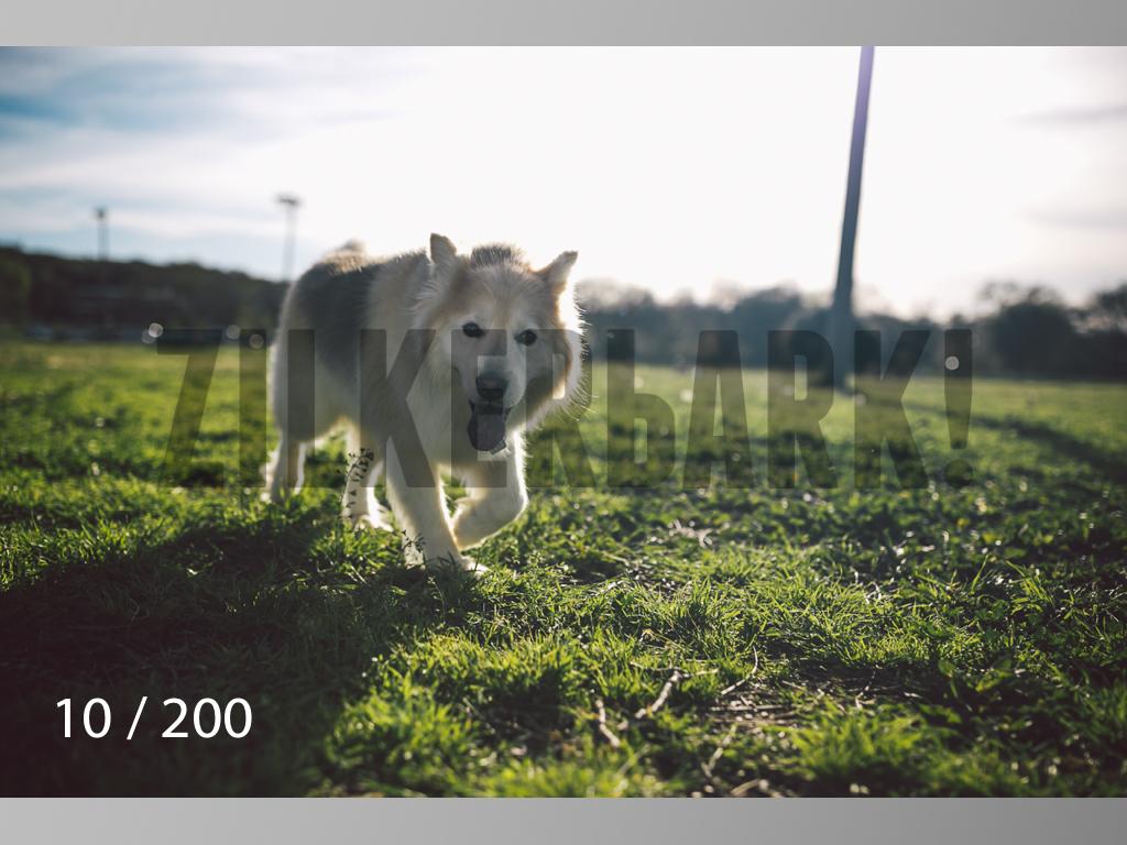 WM-010.jpg