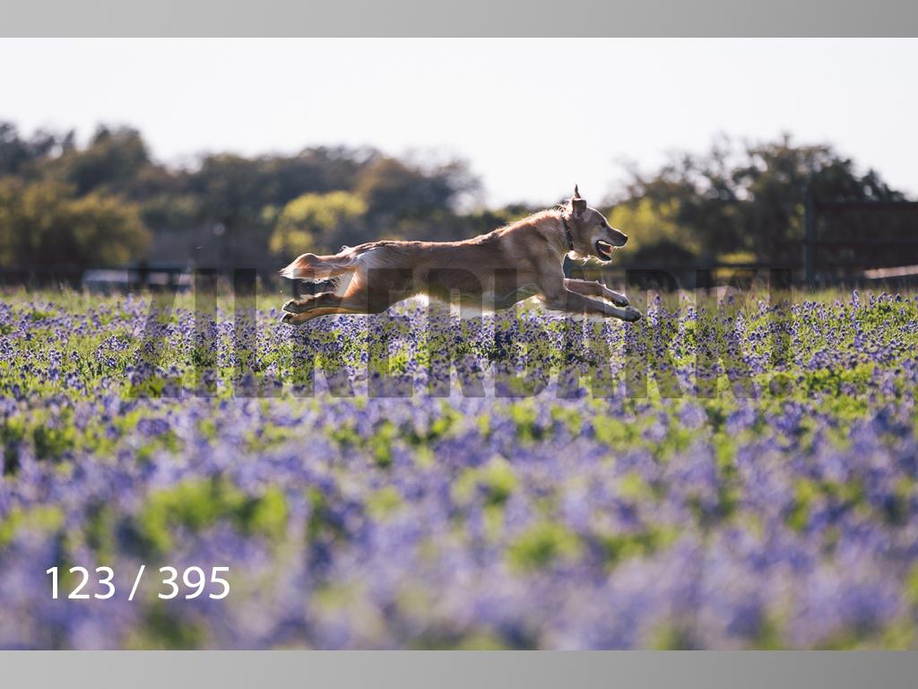 Bluebonnet wm-123.jpg
