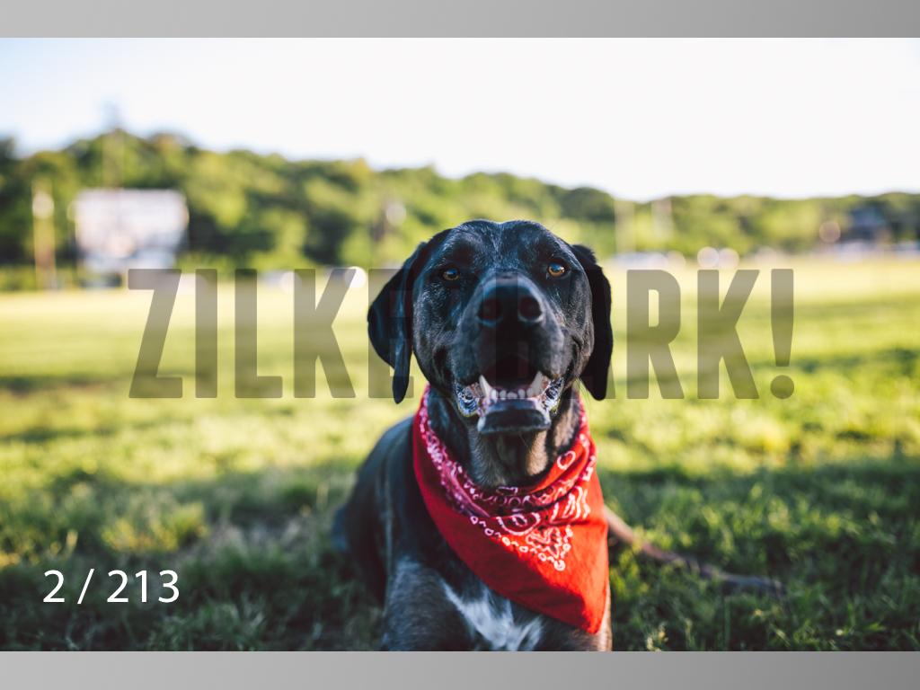 Dogs Rest WM-002.jpg