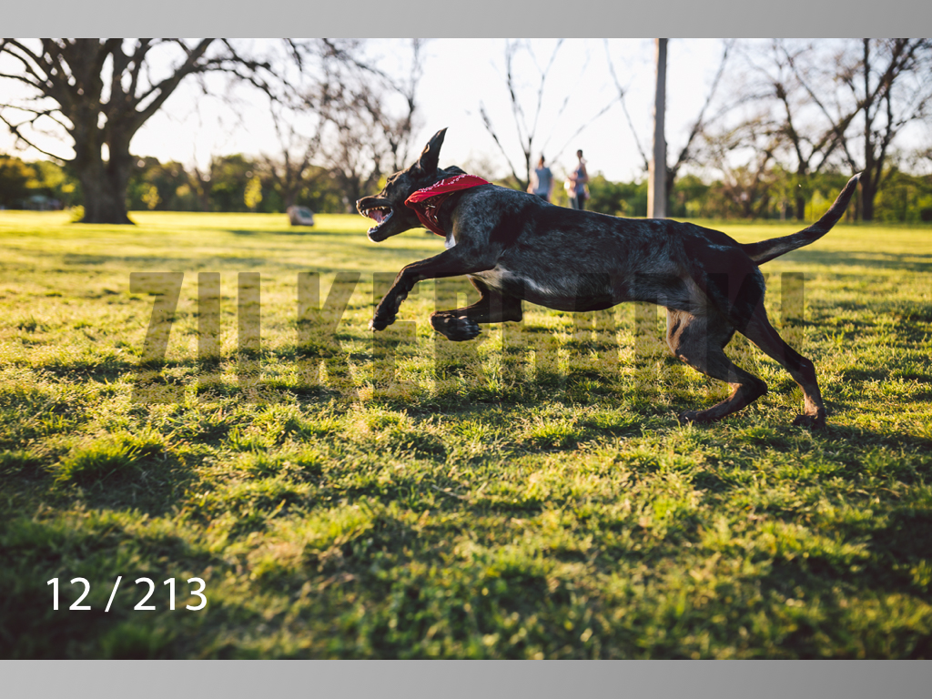 Dogs Rest WM-012.jpg