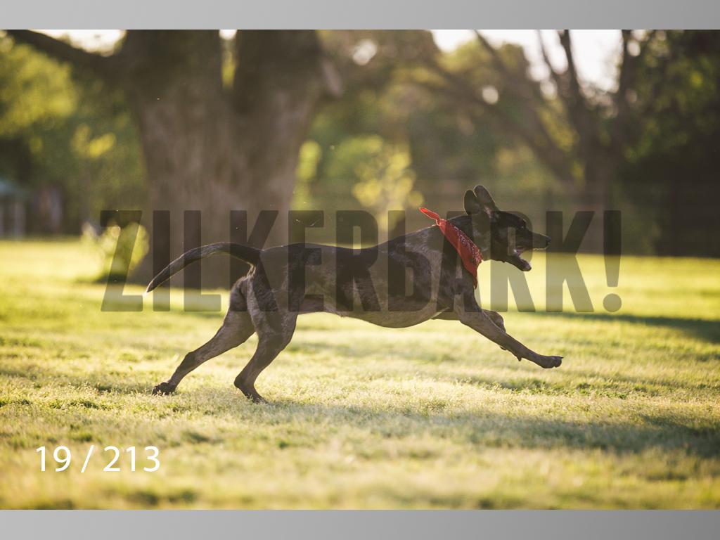 Dogs Rest WM-019.jpg