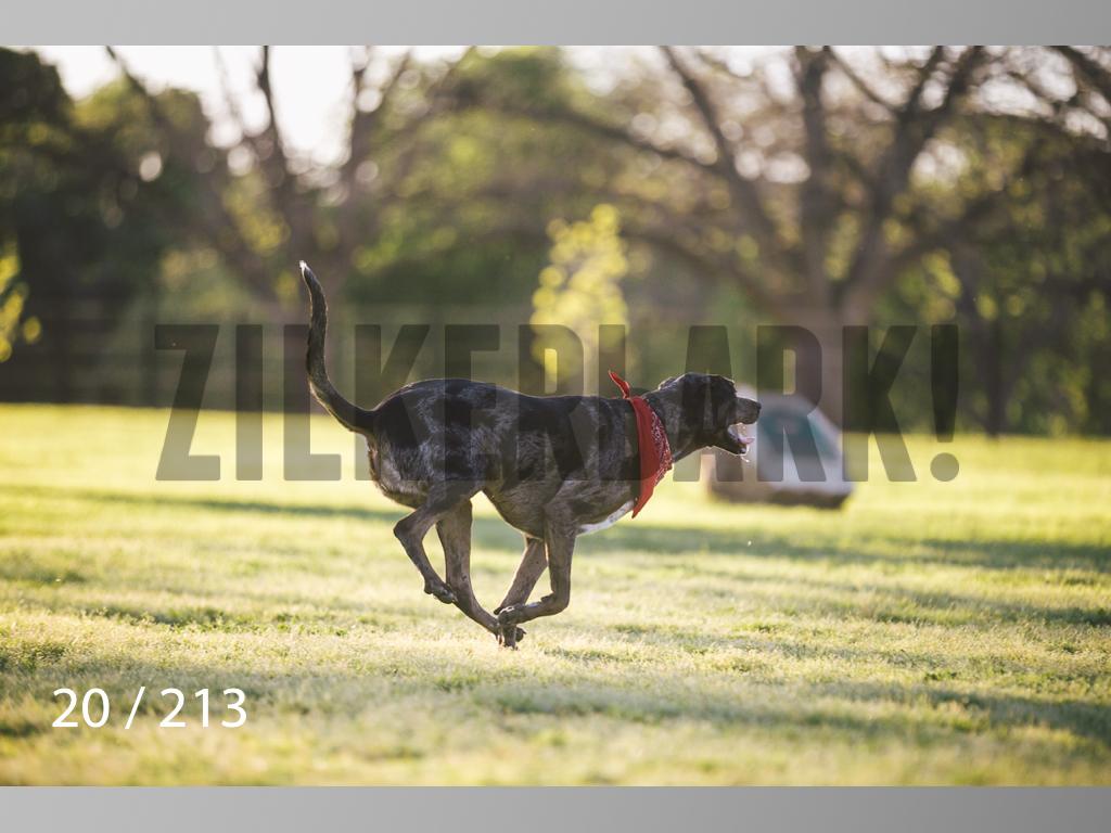Dogs Rest WM-020.jpg