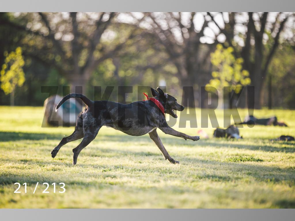 Dogs Rest WM-021.jpg